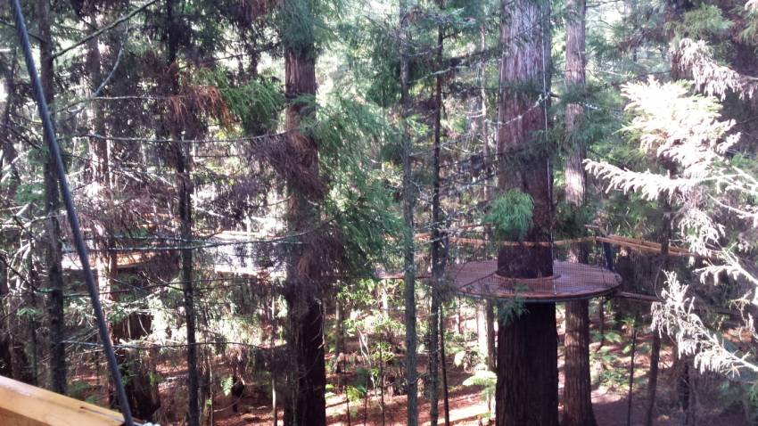 Redwoods Forest Treetop Walkway Medium