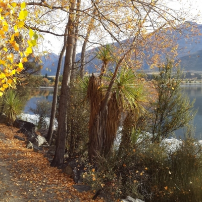 Wanaka autumn colours Medium 9 Days Southern Circle with TranzAlpine Train